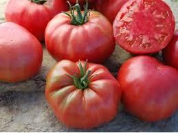 Время томатов «Cornabel»